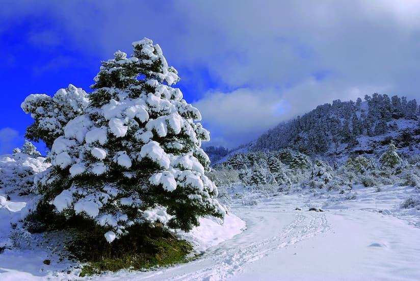Paraje natural de Sierra de las Nieves